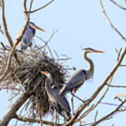 Three Herons Poster