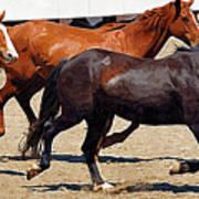 Three Horses Galloping Poster