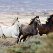 Three Mares Running Poster by Carol Walker