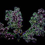 Three Neon Lilacs Poster