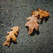Three Oak Leaves Poster