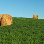 Three Old Bales Poster