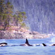 Three Orca Whales Poster