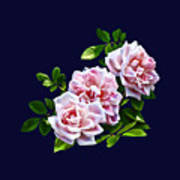 Three Pink Roses With Leaves Poster