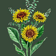 Three Playful Sunflowers Poster