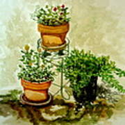 Three Potted Plants Poster