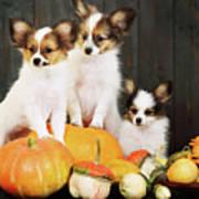 three puppy with pumpkin by Iuliia Malivanchuk Poster