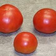 Three Red Tomatoes Poster