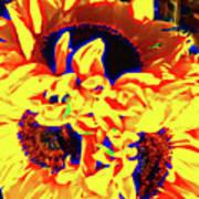 Three Sunflowers Poster