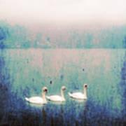 Three Swans Poster by Joana Kruse