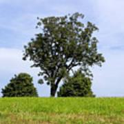 Three Tree Hill Poster