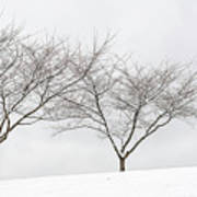 Three Trees In A Snowstorm Poster