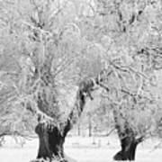 Three Trees In The Snow - Bw Fine Art Photography Print Poster