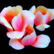 Three Tulips Poster