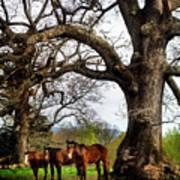 Three Under A Tree Poster