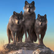Three Wolves Watching You Poster