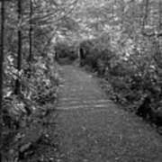 Through The Forest Canopy Black And White Poster