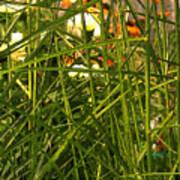 Through The Grass Curtain Poster
