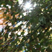 Through The Leaves 2 Poster
