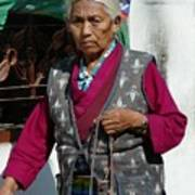 Tibetan Grandmother In Meditation Poster