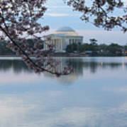 Tidal Basin Blossoms - Jefferson Memorial Poster