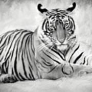 Tiger Cub At Rest Poster