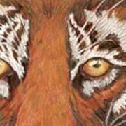 Tiger Eyes 2 Poster