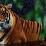Tiger Land Poster