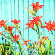 Tiger Lily And Rustic Blue Wood Poster