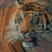 Tiger On Hunting Poster