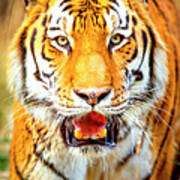 Tiger On The Hunt Poster