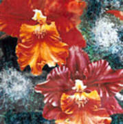 Tiger Orchids Poster