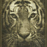 Tiger Over Dictionary Page Poster