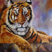Tiger Resting Poster