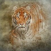 Tiger Splash Poster