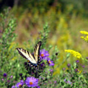 Tiger Swallowtail And Bee Poster