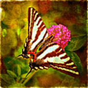 Zebra Swallowtail Butterfly - Digital Paint 3 Poster