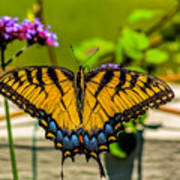 Tiger Swallowtail Butterfly By Fence Poster