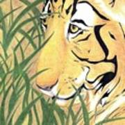 Tiger Traveler - Www.jennifer-d-art.com Poster
