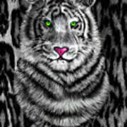Tigerflouge Poster