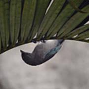 Tightrope Walker Bird Poster