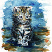 Timid Kitten Poster