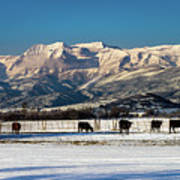 Timpanogos From The North Fields Poster