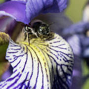 Tiny Bee Poster