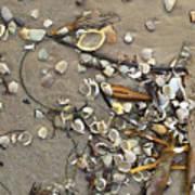Tiny Crab Shells Poster