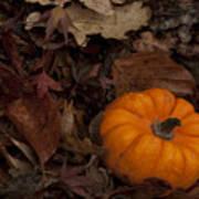 Tiny Pumpkin Poster