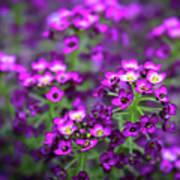 Tiny Purple Flowers Poster