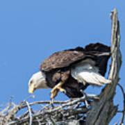 Tip Toeing Across Nest Poster