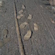 Tire Tracks And Foot Prints Poster