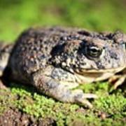 Toad You So Poster